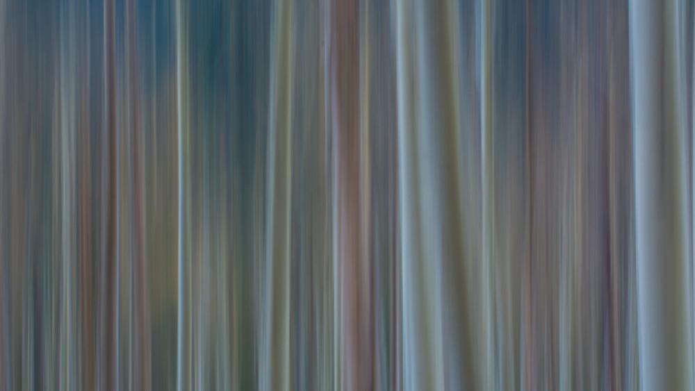 dark coloured motion blurred trees