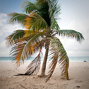 A lone palm tree, its fronds dangling to touch the sand, stands alone along the beach in the Ocean Park neighborhood of San Juan, Puerto Rico at dusk.
