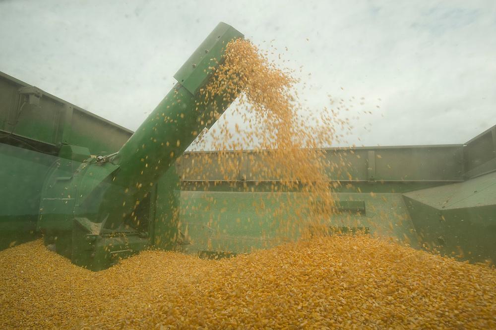 Corn production