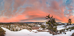 """""""Lake Angela Sunset 1"""" - Photograph of a bright pink sunset and an old tree above Lake Angela. Donner Lake and Truckee can be seen in the distance."""