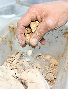 Dried Baker's Yeast