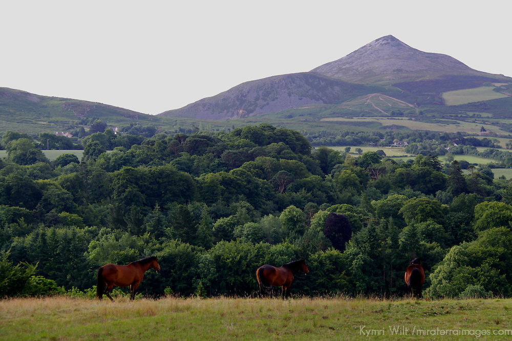Europe; Ireland; Enniskerry. Horses and Surgarloaf Mountain of County Wicklow.