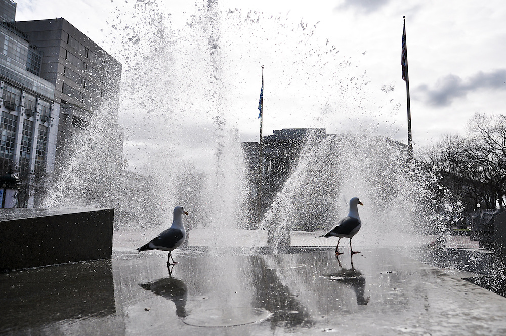 Seagulls in a fountain, Market St.