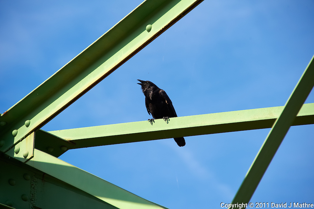 Crow on the Lambertville New Hope Bridge.  Image taken with a Nikon D700 and 28-300 mm VR lens (ISO 200, 300 mm, f/8, 1/400 sec). Raw image processed with Capture One Pro 6, Nik Define 2, and Photoshop CS5.