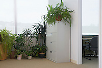 Potted plants by office window