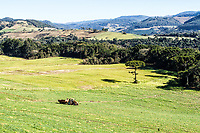 Paisagem rural na Linha Pinhal. Treze Tílias, Santa Catarina, Brasil. / Rural landscape at Linha Pinhal. Treze Tilias, Santa Catarina, Brazil.