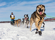 Musher Andy Pohl after the restart in Willow of the 46th Iditarod Trail Sled Dog Race in Southcentral Alaska.  Afternoon. Winter.
