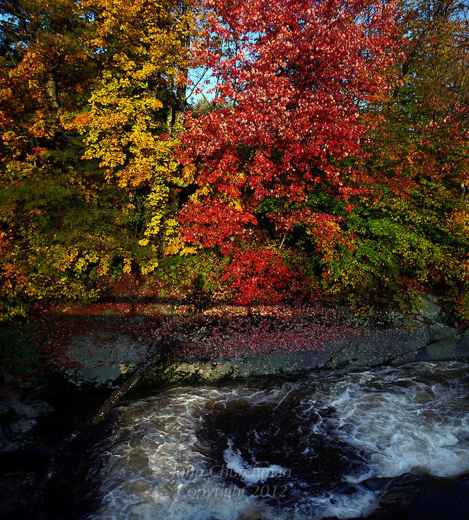 Maples along the Browns River, Jericho, Vermont