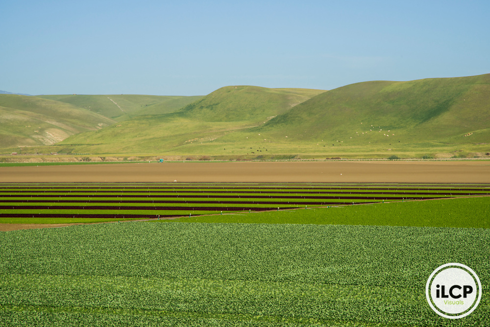 USA: California, No Water No Life, CA Drought Expedition 4, Agricultural fields outside King City
