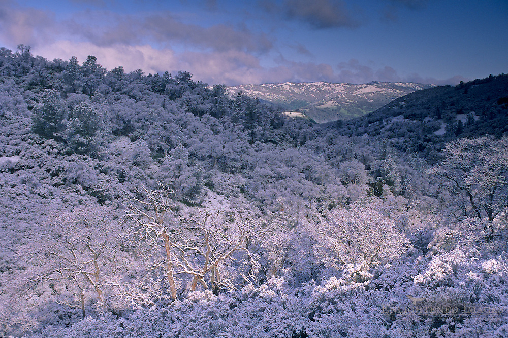 Rare low-altitude snowstorm during an El Niño winter covers the Elyar Canyon, Alameda County, CALIFORNIA