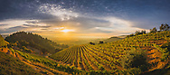 Newton Vineyard, St Helena, Napa Valley, California
