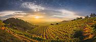 Newton Vineyard, St Helena, Napa Valley, California