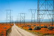Antelope Valley, CA Poppies