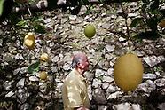 On Amalfi Coast, the Business of Lemons