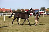 Class 17 - Inhand Novice Horse