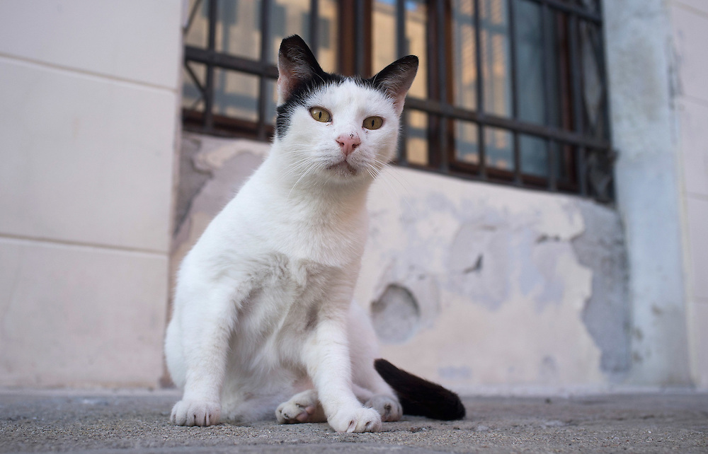"VENICE, ITALY - AUGUST 27:  A stray cat poses in a ""campo"" on August 27, 2011 in Venice, Italy. Dingo is the Anglo-Venetian association part of the AISPA,  founded in 1965 by Helen Saunders and Elena Scapabolla and is devoted to the welfare of venetian stray cats. Cats in Venice"