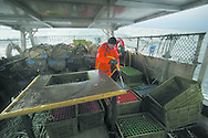 Fisherman John Macgregor, working  cleaning newly-caught prawns aboard the boat he part-owns named My Amber, as he fishes for prawns off Scotland's west coast in a marine 'box' in the inner sound of Rona which restricts entry to large trawlers looking for white fish and allows around 16 creelers unrestricted fishing.