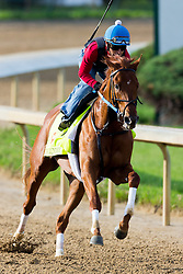 Derby 142 hopeful Gun Runner with Carlos Rosas up worked the track during training, Monday, May 02, 2016 at Churchill Downs in Louisville.