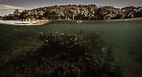 Under/over shot in Half Moon Bay, Roatan, Honduras.