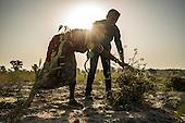 Farming Guar in Gujarat