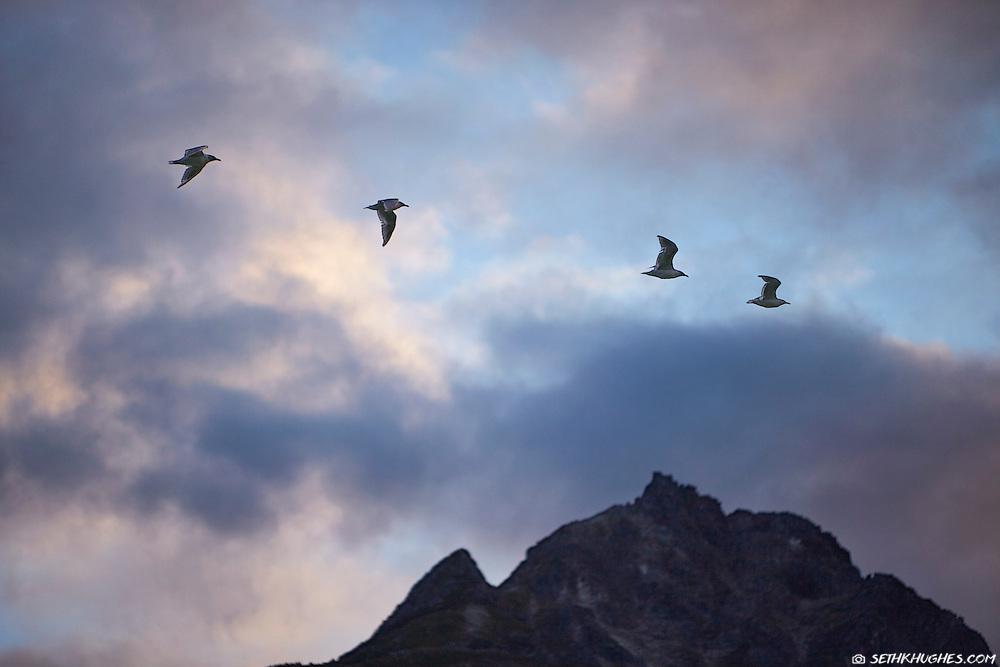 Birds fly across a mountain top at sunset near Haines, Alaska.