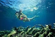 scuba diver over reef of elkhorn coral,<br /> Acropora palmata ( Threatened Species ), <br /> Berry Islands, Bahamas<br /> ( Western Atlantic Ocean )  MR 115