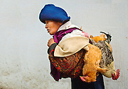 Indigenous Otovalo woman heads to the famous market in Otavalo, Ecuador, with her chickens