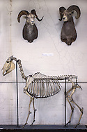 Skeleton specimens and mounts  at Tulane Univeristy's Natural History Museum