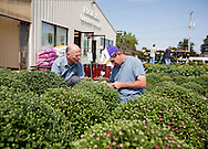 Lynn Burrell (from left) of Marion talks with Troy Seeley of Cedar Rapids as they work on tagging the mums for sale at Frontier Garden Center, 1941 Blairs Ferry Road NE, in Cedar Rapids, on Thursday, September 8, 2011.
