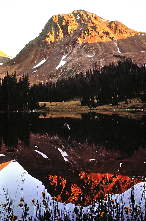 Illuminated by evening alpenglow, reflecting in a pool. Colorado