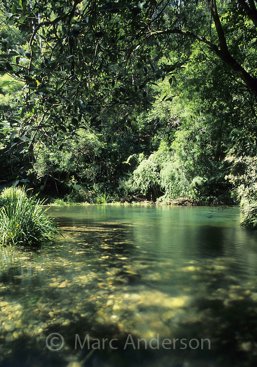 Beautiful natural pool in subtropical rainforest, Dorrigo National Park, NSW, Australia..