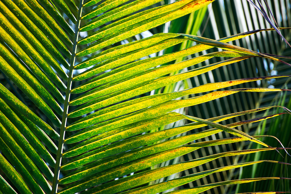 Close-up of a palm leaf in the Caribbean.