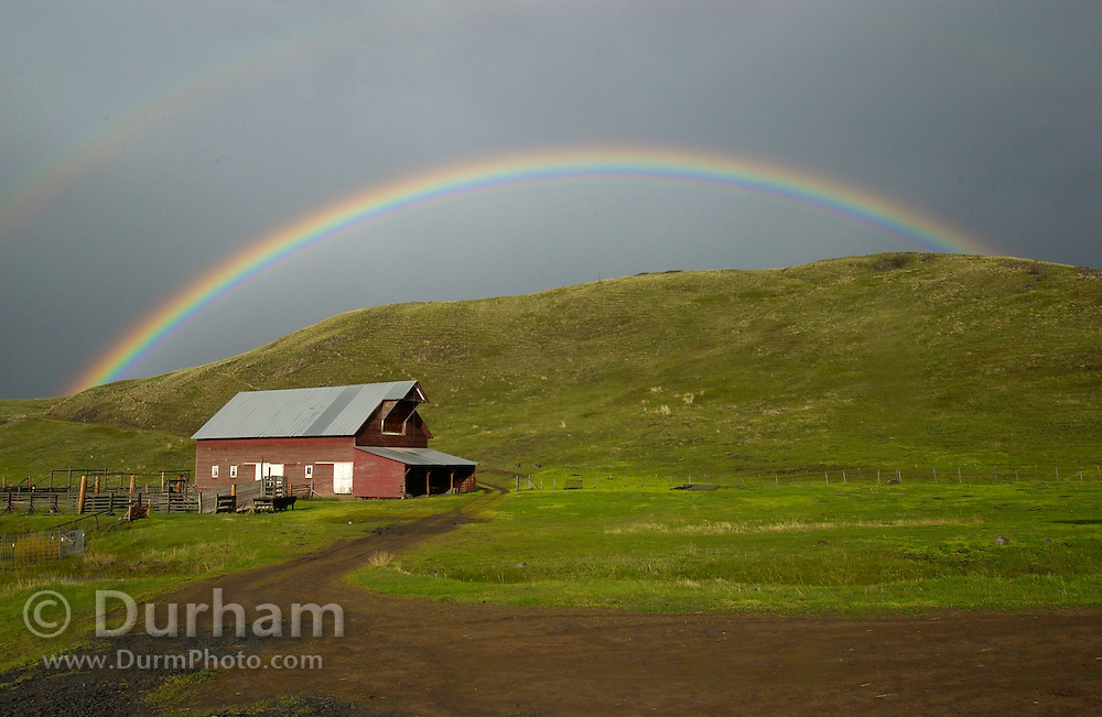 Spring weather in Wallowa County changes rapidly. May 14 dawned clear and warm with temperatures heading into the upper 70's. Afternoon brought a sudden electrical storm with heavy winds and rain, only to be followed by clear skies, and warm sun again. This rainbow, over a barn on The Nature Conservancy's Zumwalt Prairie Preserve, harkened the breaking of the storm.