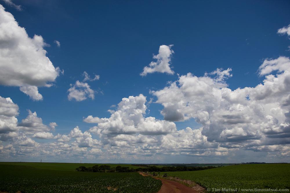 An open lanscape of soybean fields.
