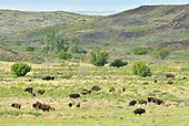 American Prairie Reserve: Springtime