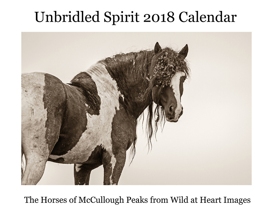 "We're excited to offer our first Unbridled Spirit Calendar, featuring the wild horses of McCullough Peaks.  From majestic stallions to tiny foals, many of the horses we've come to know and love fill the pages of our new calendar.  If you love horses, especially the wild horses of McCullough Peaks, this 14""x22"" wall calendar is for you."