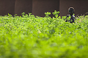 A boy stands in tall grass in the village of Ying, northern Ghana, on Monday June 4, 2007..
