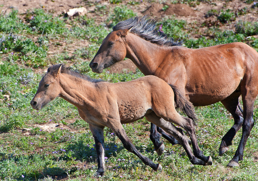 Mare and young foal
