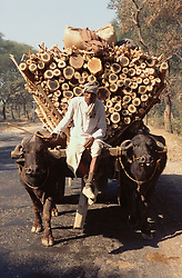 Buffaloes pulling a wagon heavily laden with logs of wood in the countryside; India,