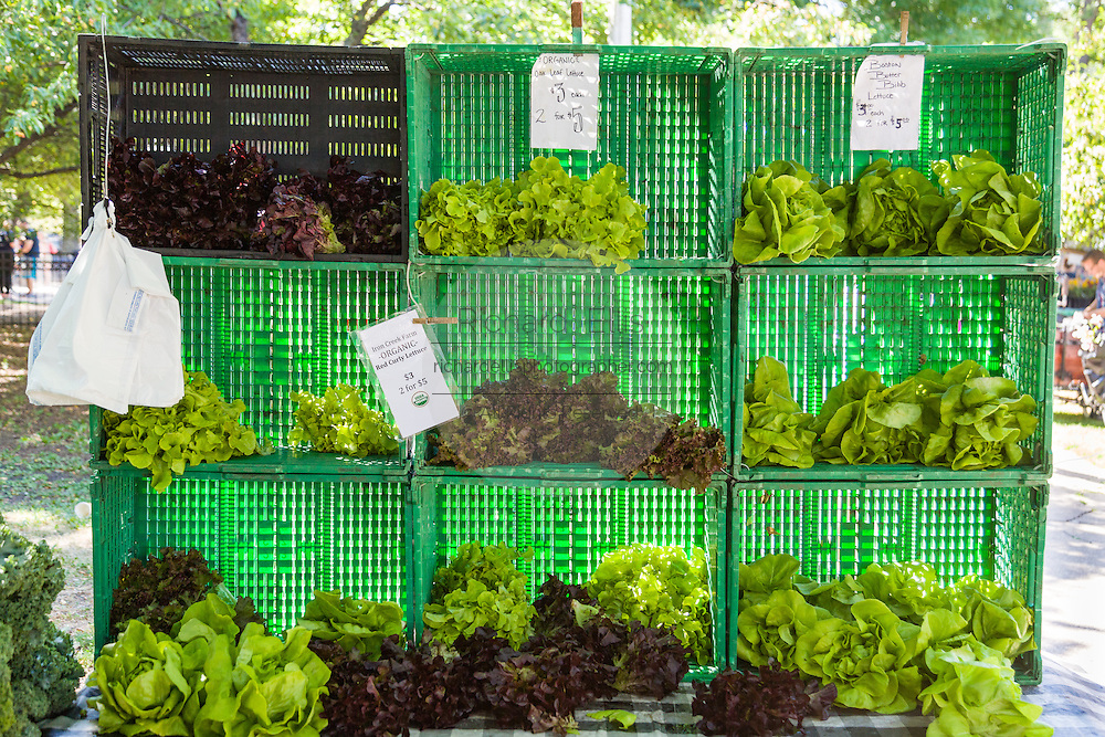 Fresh organic lettuce and greens on sale at a farmers market in Wicker Park August 2, 2015 in Chicago, Illinois, USA.