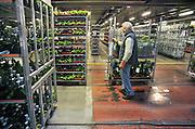 Duitsland, Herongen, 15-12-2010Deze nieuwe veiling is een samengaan van twee Duitse en een Nederlandse uit Venlo. Ultramodern en erg groot.Vooral voor bloemen en planten. In deze tijd ook kerststukjes en versierde planten en takken.Foto: Flip Franssen/Hollandse Hoogte