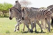 Makgadikgadi and Nxai Pans, Botswana