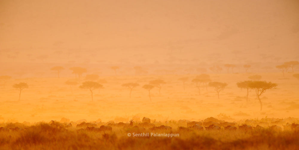 Masai Mara landscape at sunset, Kenya