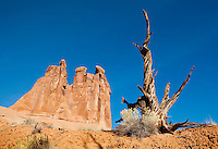 An old tree snag and rabbitbrush on a hillside of macrobiotic soil, Arches national Park, Utah, USA.