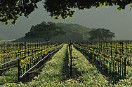 Vineyard in the foothills of the Sierra de Salinas, near Soledad, Monterey County, California