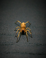 Spider at my Computer Desk. Image taken with a Leica TL2 camera and 60 mm f/2.8 macro lens