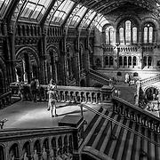The Natural History Museum, London, UK