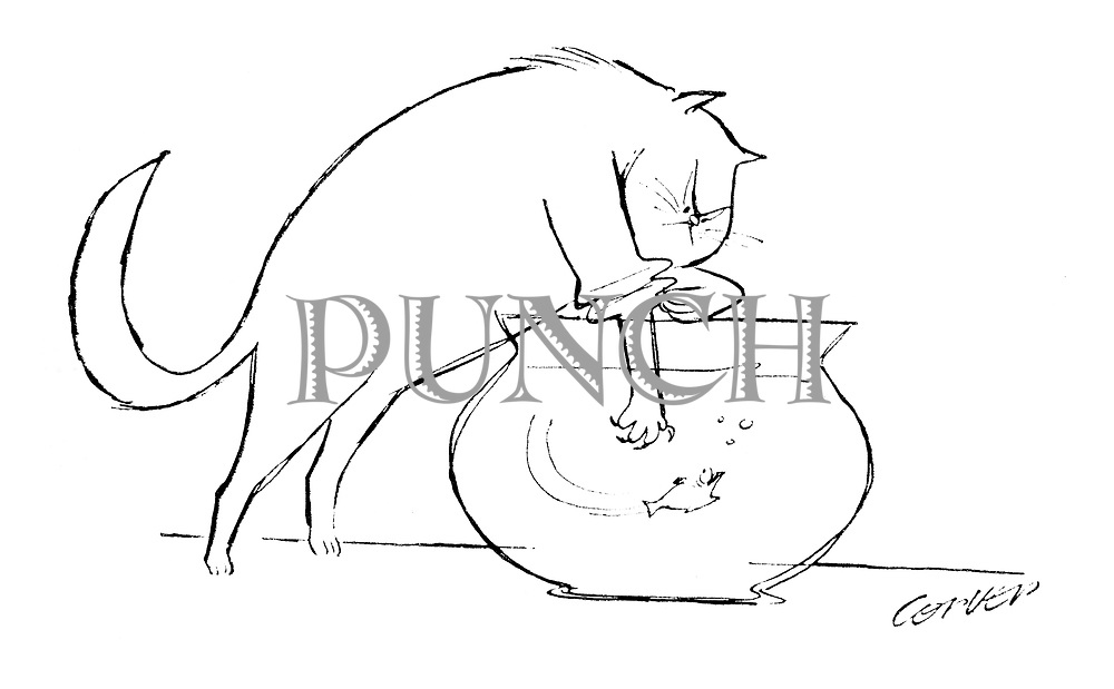 "(A cat rolls up its ""sleeve"" to catch a goldfish)"