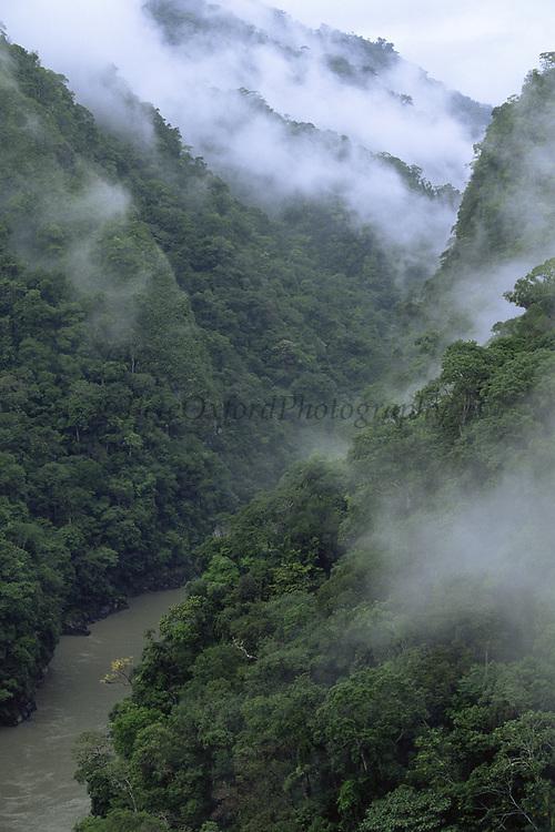 Pongo de Mainique Canyon<br />Urubamba River<br />Transition Zone between Cloud and Rain Forest<br />Amazon,   PERU   South America