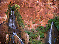 Fresh spring water coming out of the red walls of the Grand Canyon, creating a lush green environment surrounding the spring, Arizona.